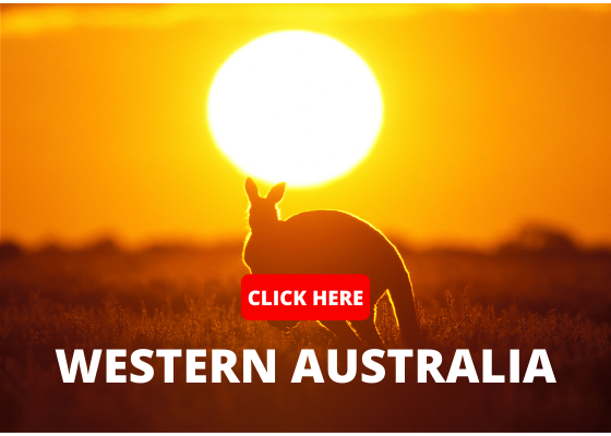 kangaroo and a sunset in the outback of western australia